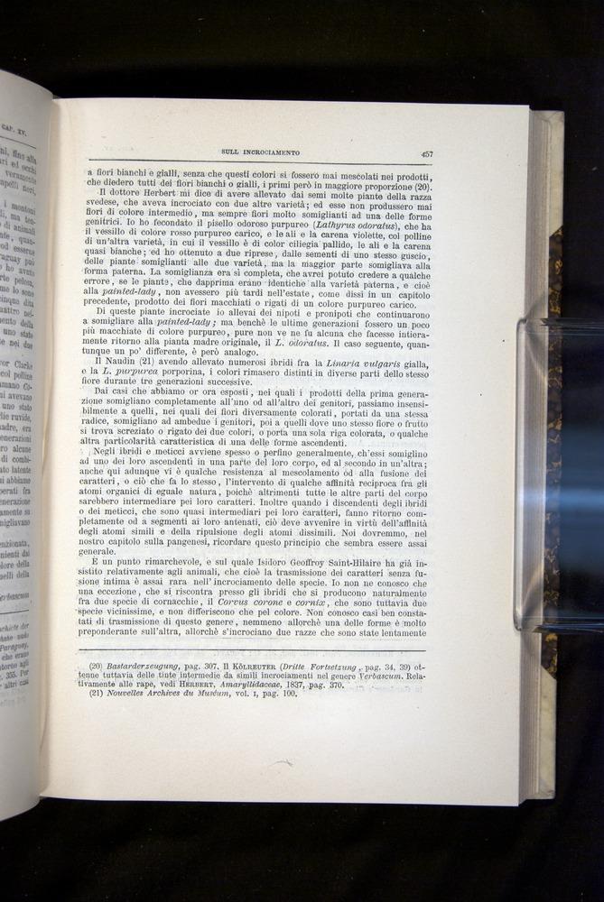 Image of Darwin-F920-1876-457