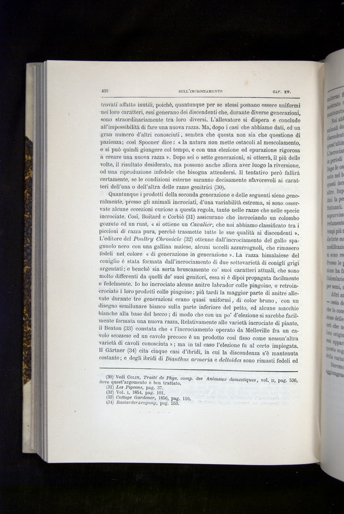 Image of Darwin-F920-1876-460