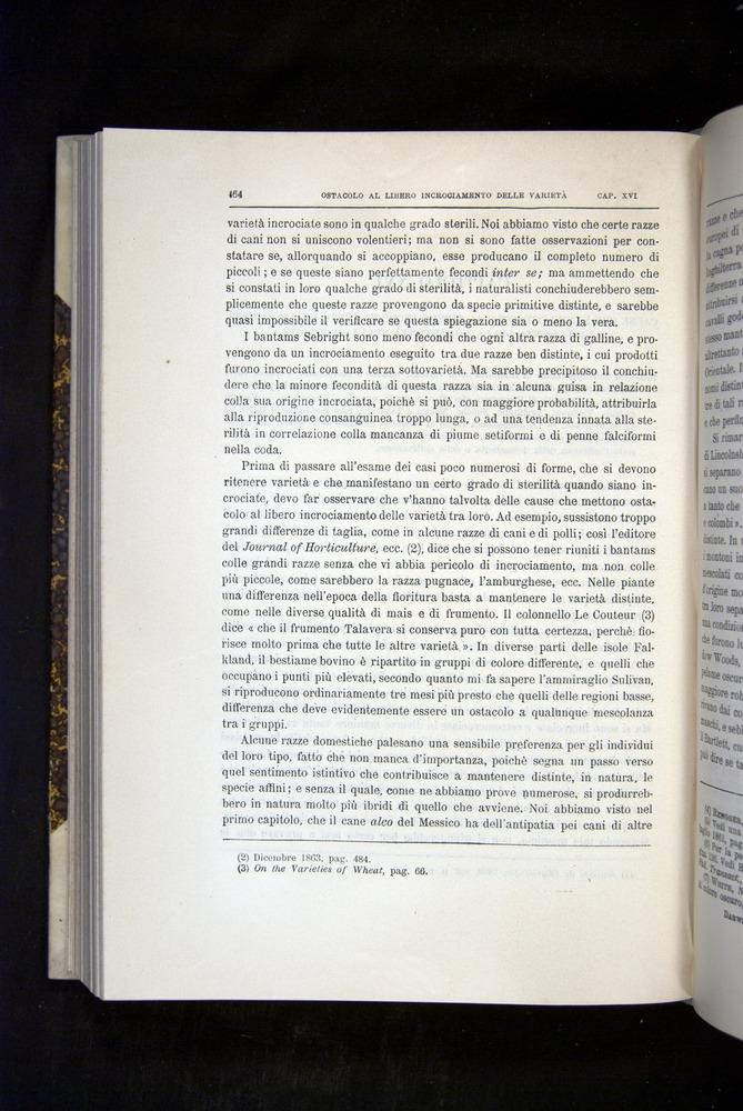 Image of Darwin-F920-1876-464