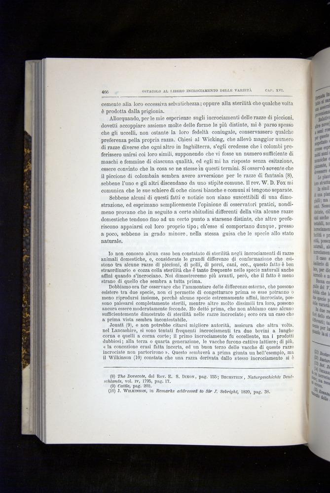 Image of Darwin-F920-1876-466