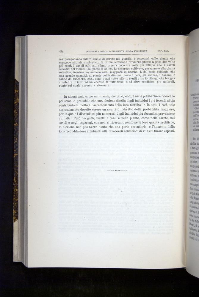 Image of Darwin-F920-1876-474