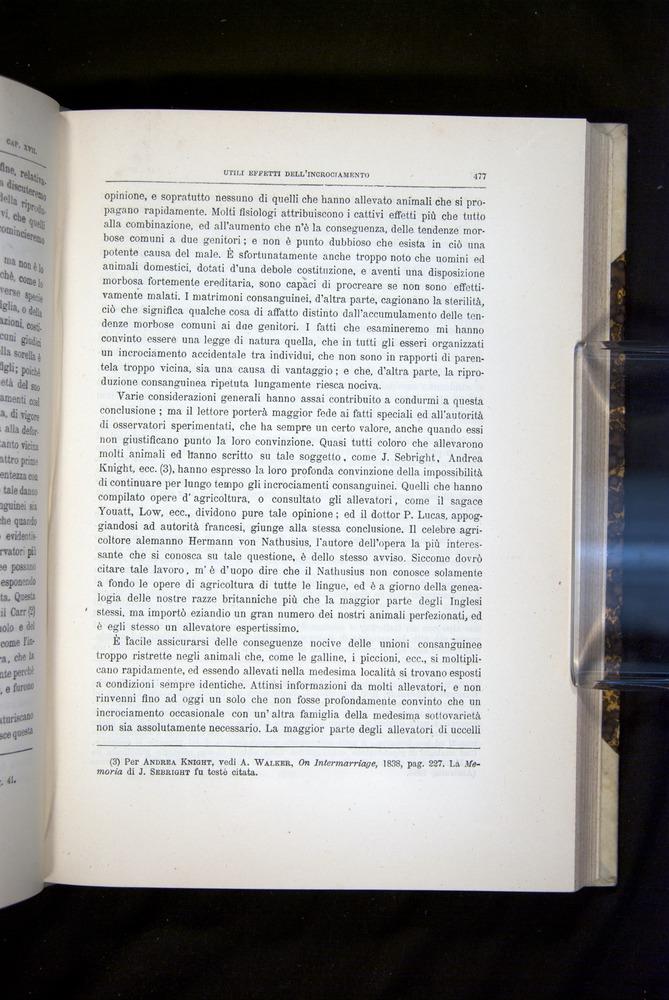 Image of Darwin-F920-1876-477