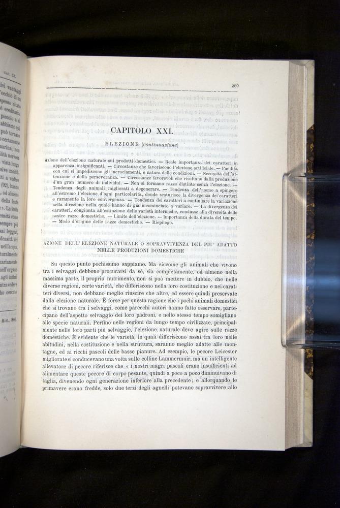 Image of Darwin-F920-1876-569