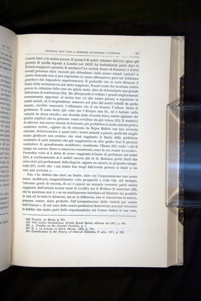 Image of Darwin-F920-1876-585