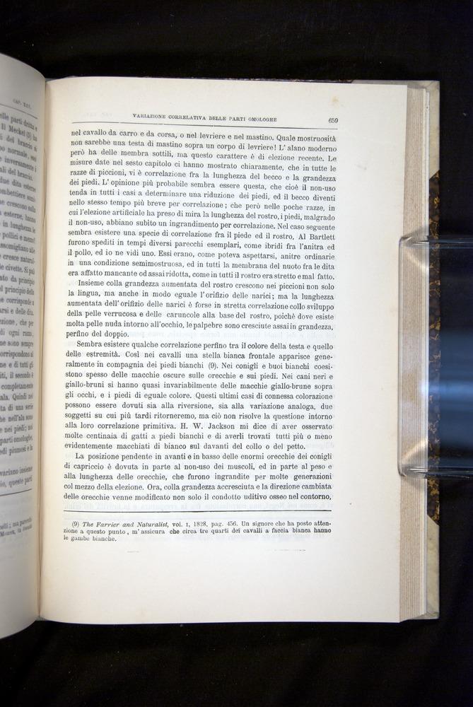 Image of Darwin-F920-1876-659