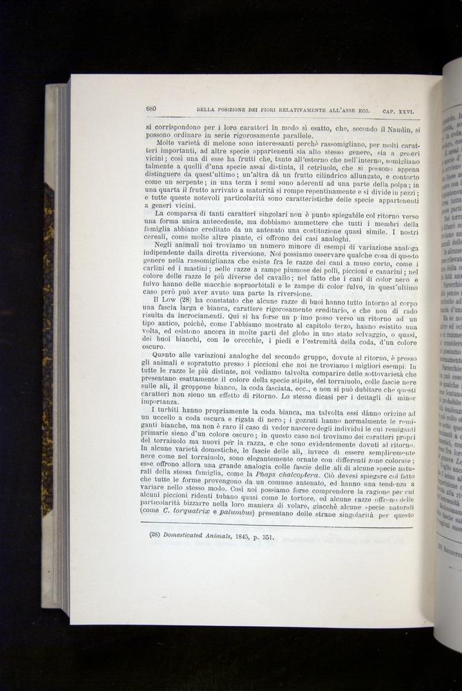 Image of Darwin-F920-1876-680