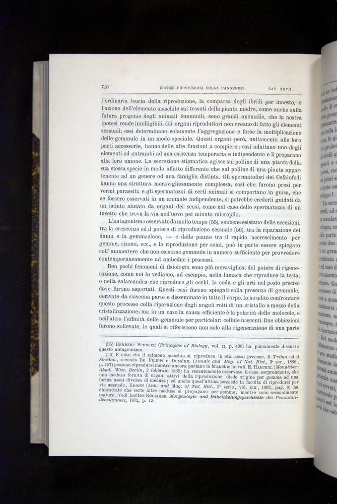 Image of Darwin-F920-1876-710