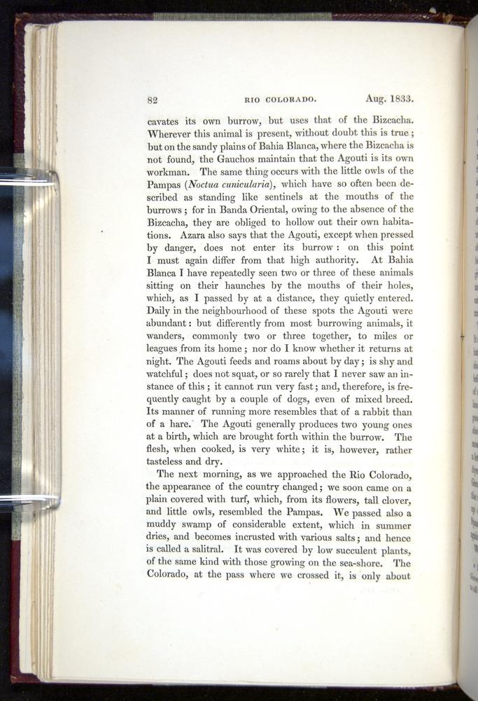 Image of Darwin-F11-1839-00082
