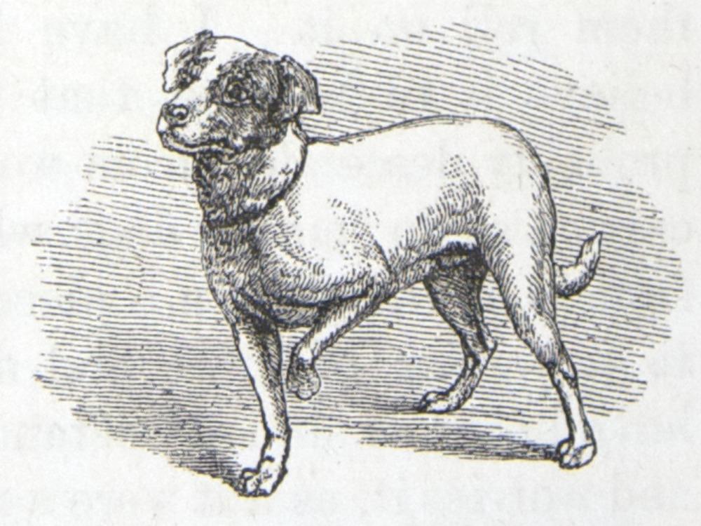 Image of Darwin-F1142-1872-zzzz-det-043