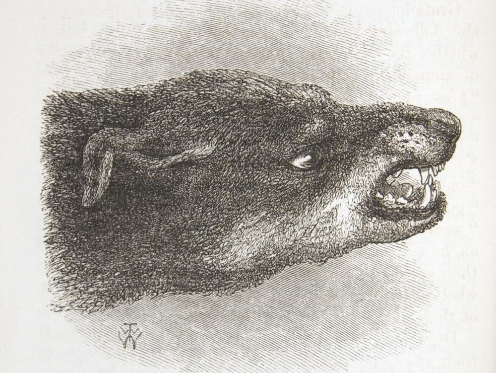 Image of Darwin-F1142-1872-zzzz-det-118