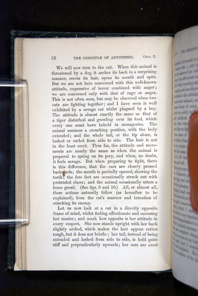 Image of Darwin-F1142-1872-056
