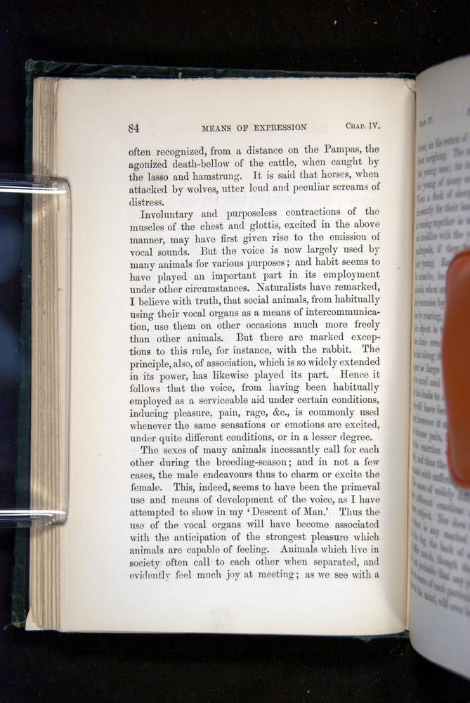 Image of Darwin-F1142-1872-084