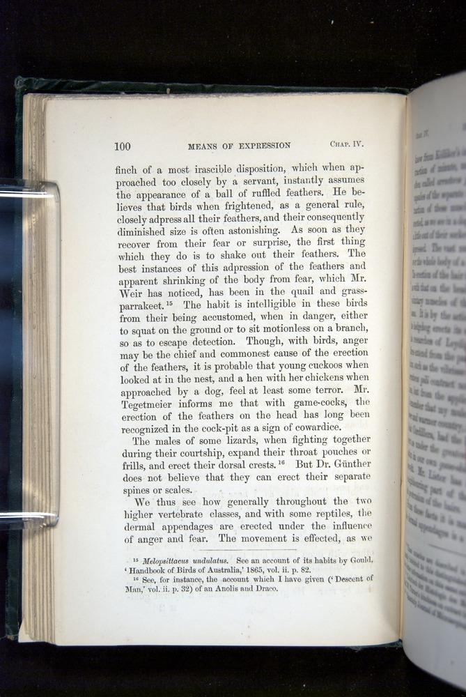 Image of Darwin-F1142-1872-100