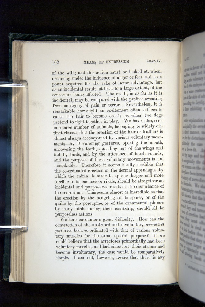 Image of Darwin-F1142-1872-102