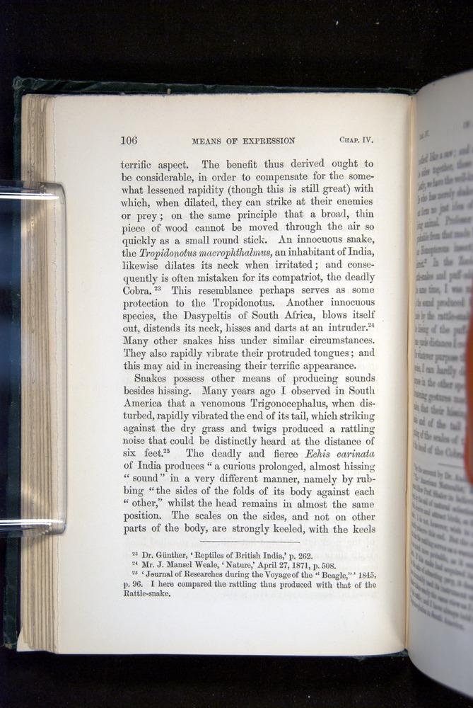 Image of Darwin-F1142-1872-106