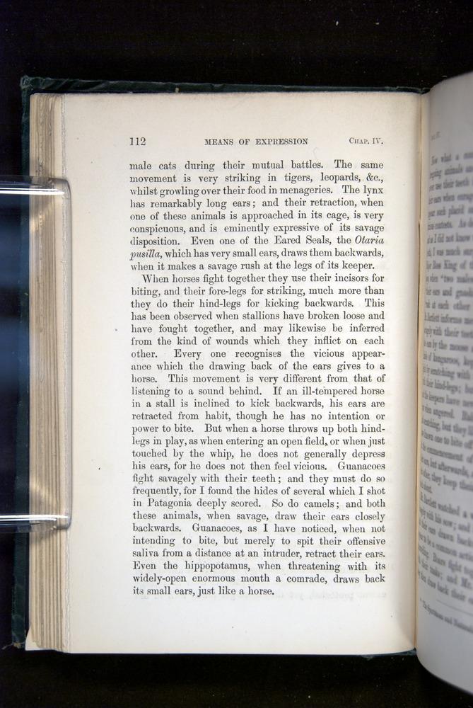 Image of Darwin-F1142-1872-112