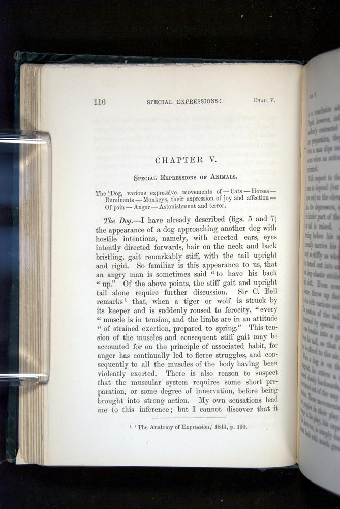 Image of Darwin-F1142-1872-116
