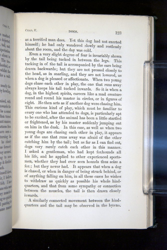 Image of Darwin-F1142-1872-123