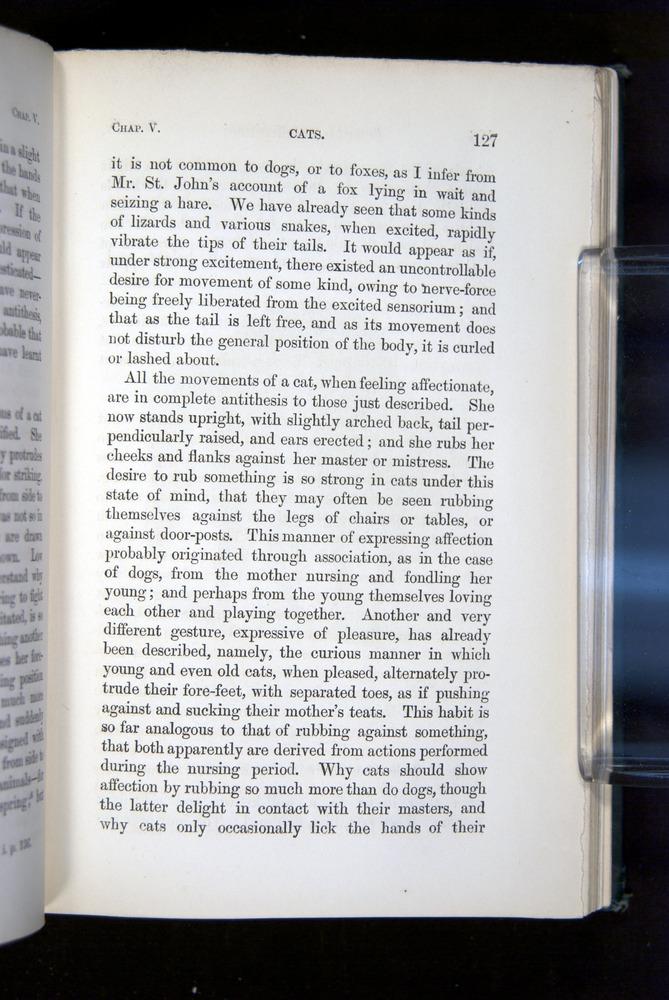 Image of Darwin-F1142-1872-127