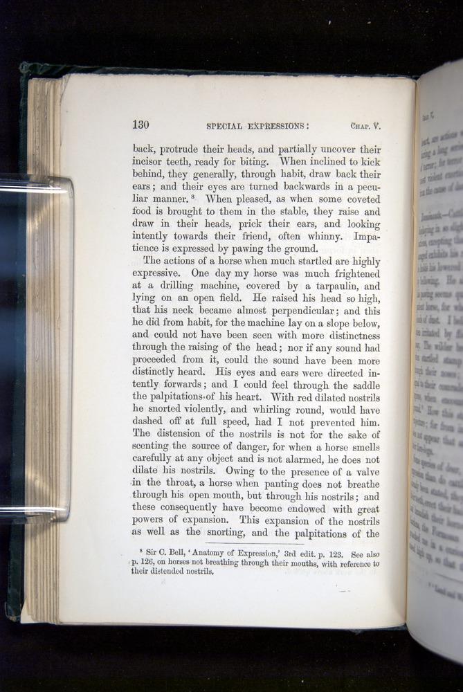 Image of Darwin-F1142-1872-130