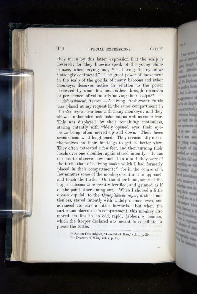 Image of Darwin-F1142-1872-144