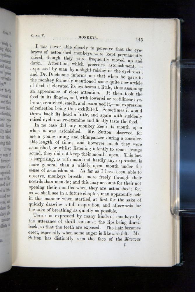 Image of Darwin-F1142-1872-145
