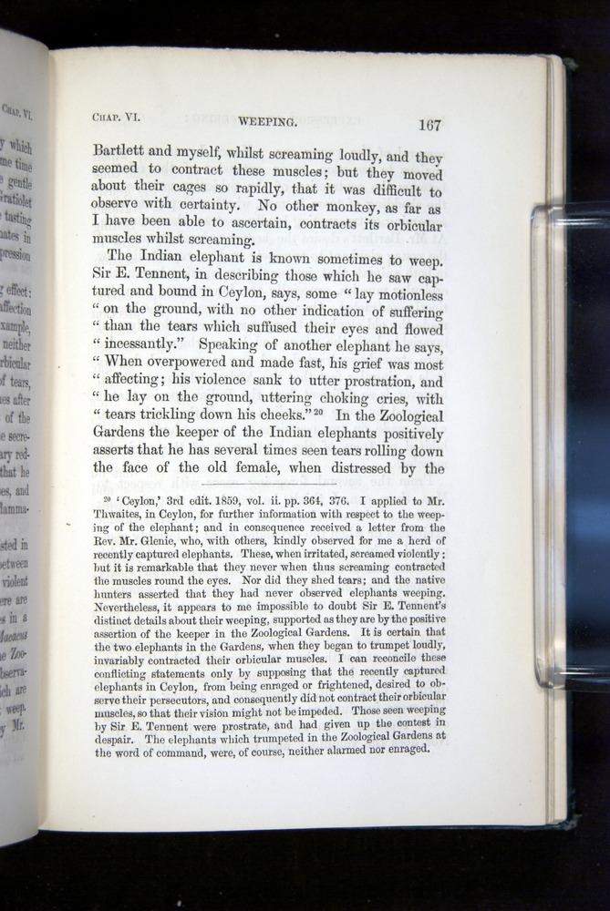 Image of Darwin-F1142-1872-167