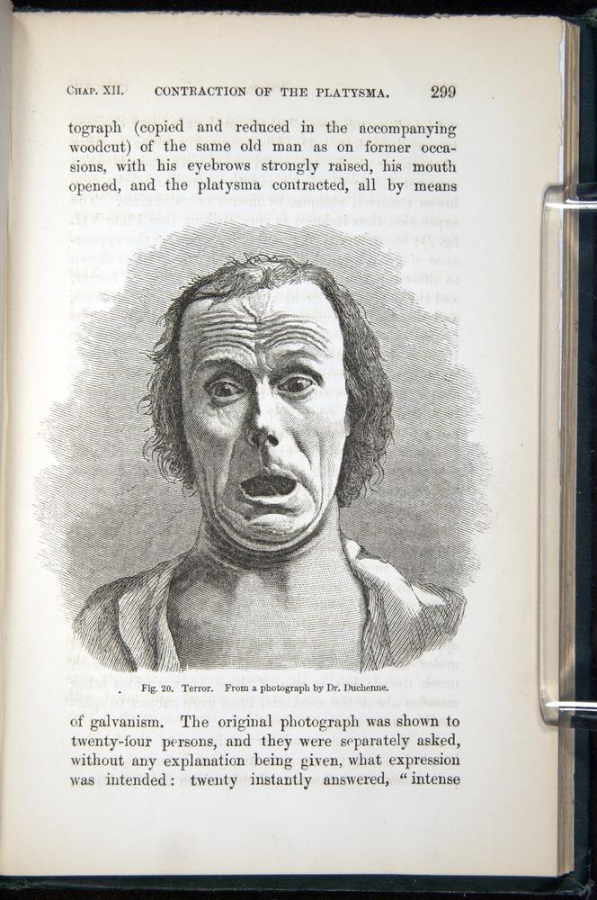 Image of Darwin-F1142-1872-299