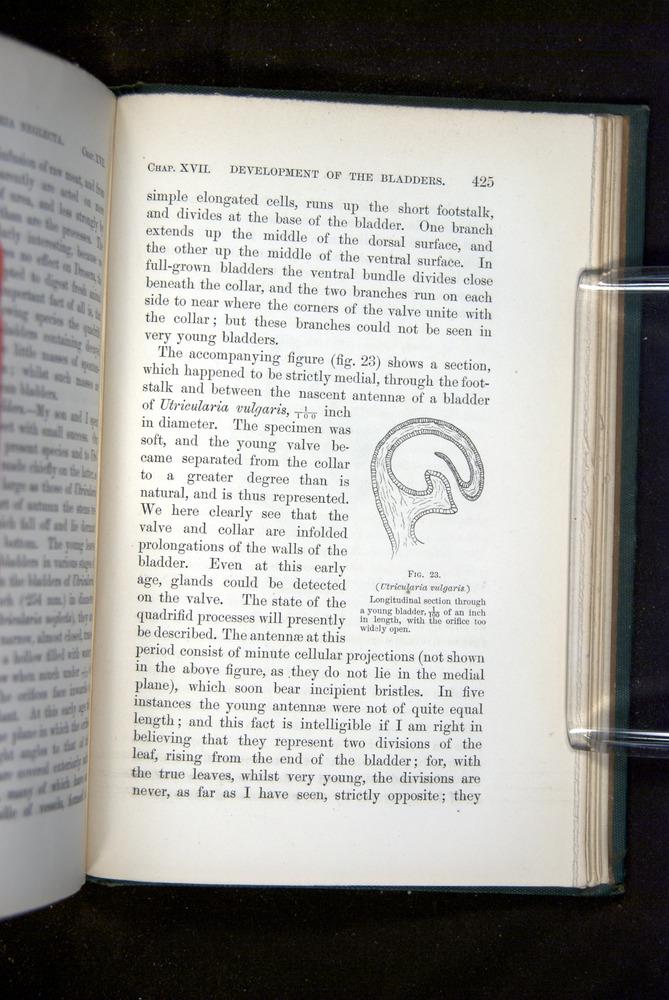 Image of Darwin-F1218-1875-00425