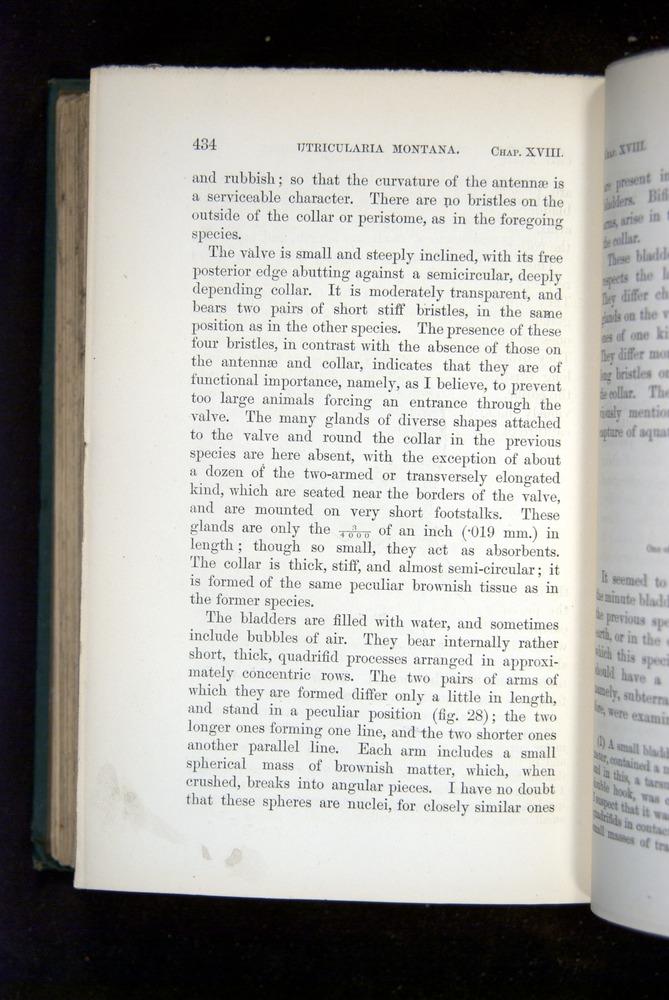 Image of Darwin-F1218-1875-00434