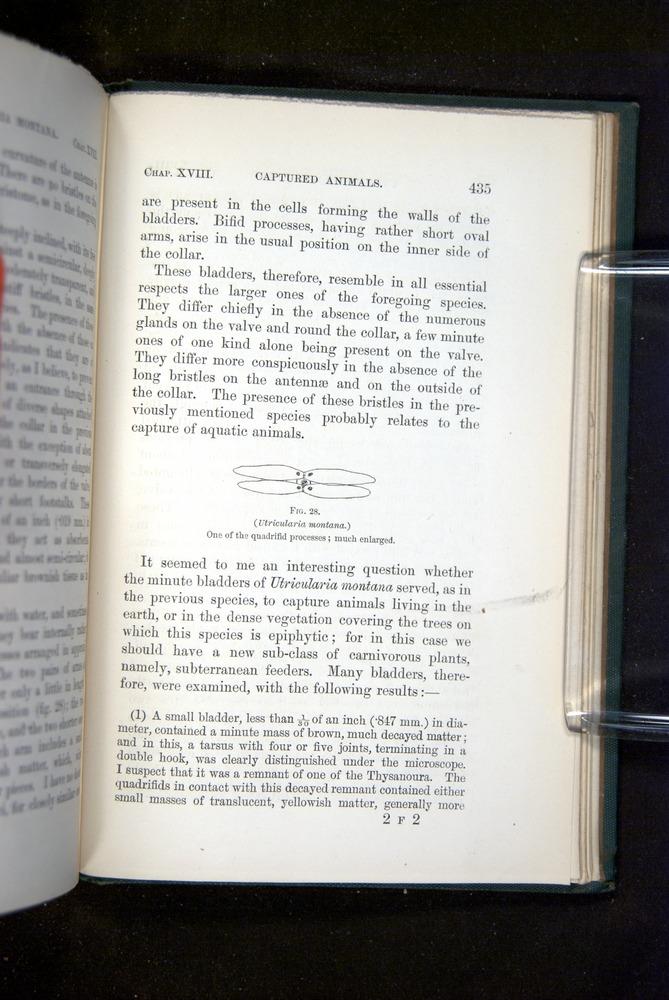 Image of Darwin-F1218-1875-00435