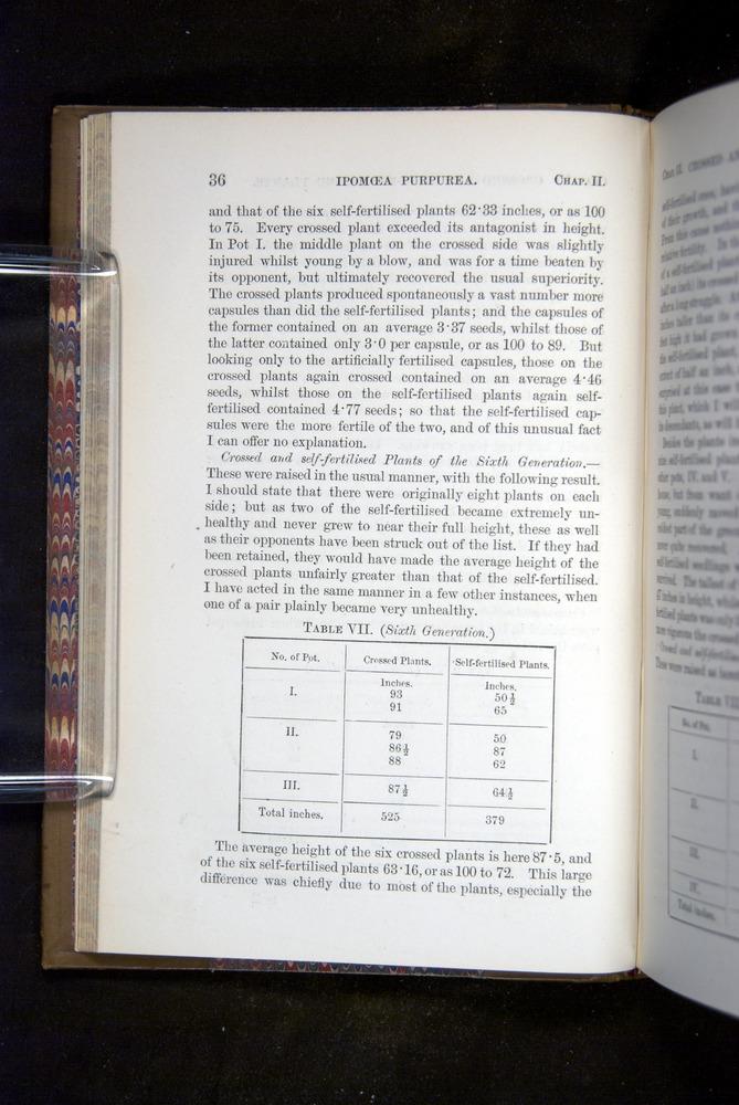 Image of Darwin-F1249-1876-036