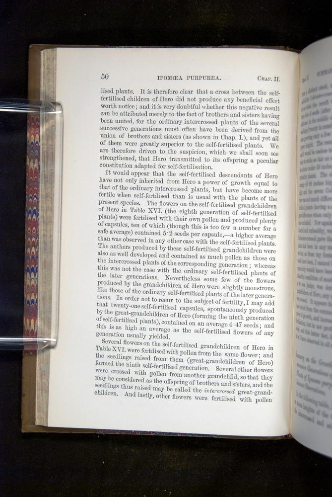 Image of Darwin-F1249-1876-050