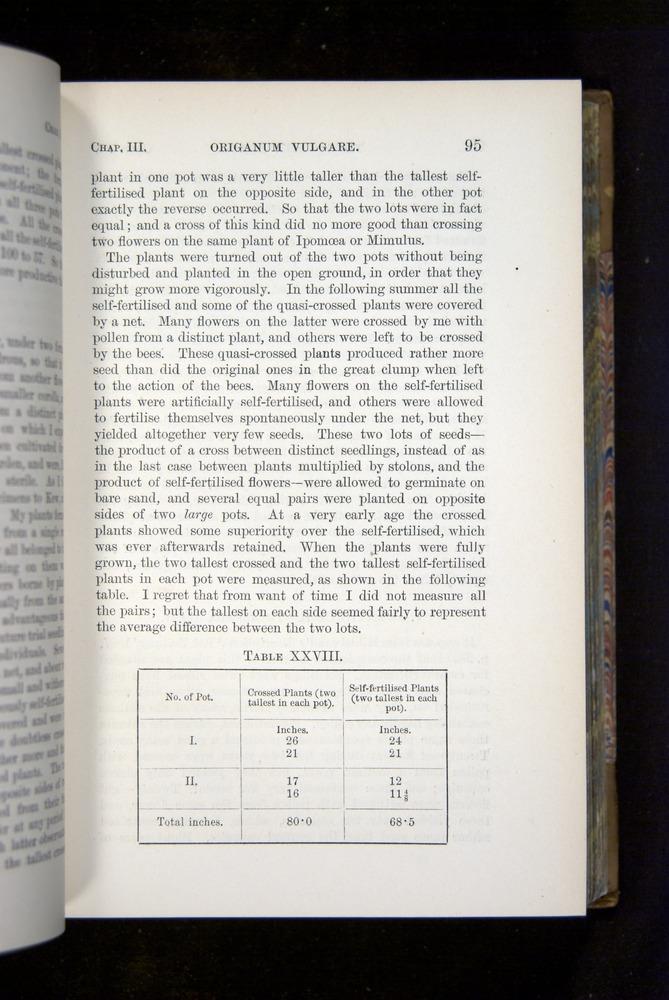 Image of Darwin-F1249-1876-095