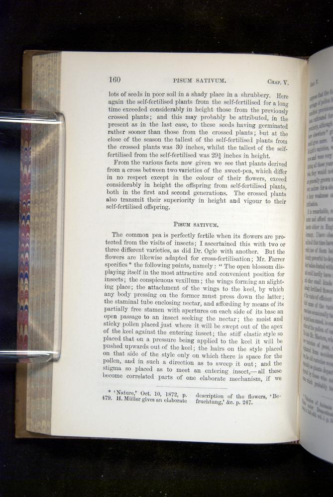 Image of Darwin-F1249-1876-160