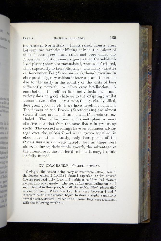 Image of Darwin-F1249-1876-169