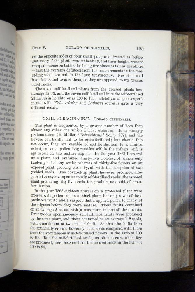 Image of Darwin-F1249-1876-185
