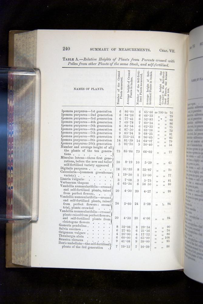 Image of Darwin-F1249-1876-240