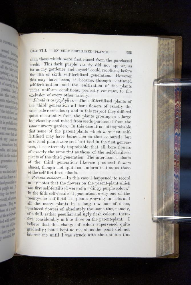 Image of Darwin-F1249-1876-309