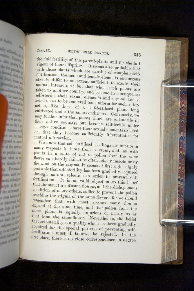 Image of Darwin-F1249-1876-345