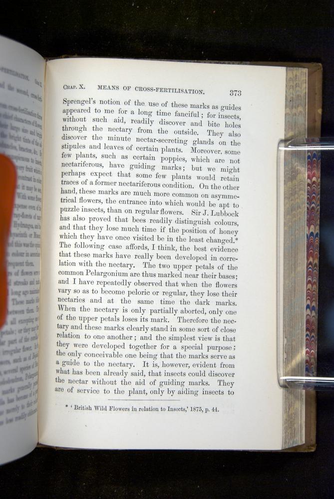 Image of Darwin-F1249-1876-373