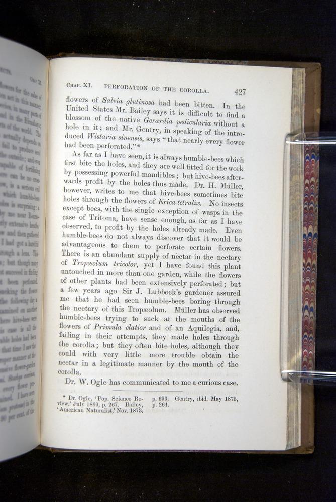 Image of Darwin-F1249-1876-427