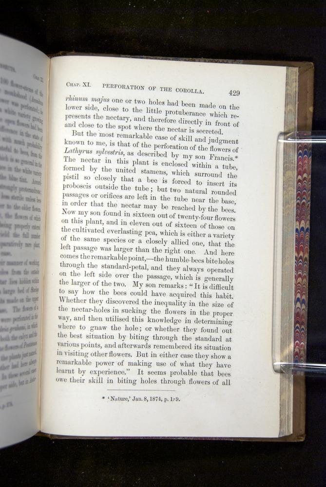 Image of Darwin-F1249-1876-429
