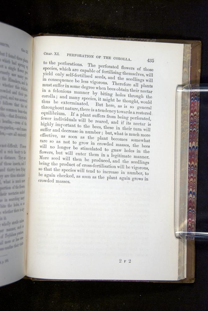 Image of Darwin-F1249-1876-435