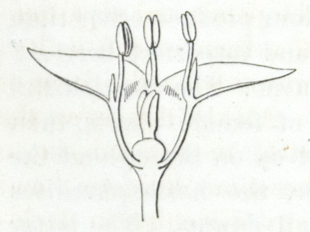 Image of Darwin-F1277-1877-zzzz-det-294-1