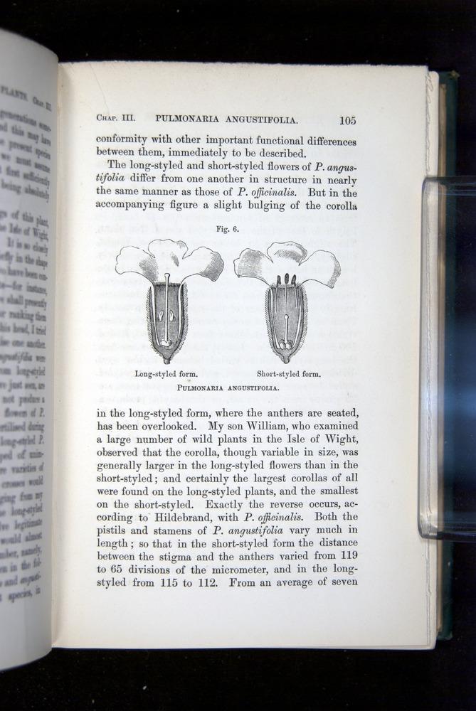 Image of Darwin-F1277-1877-105