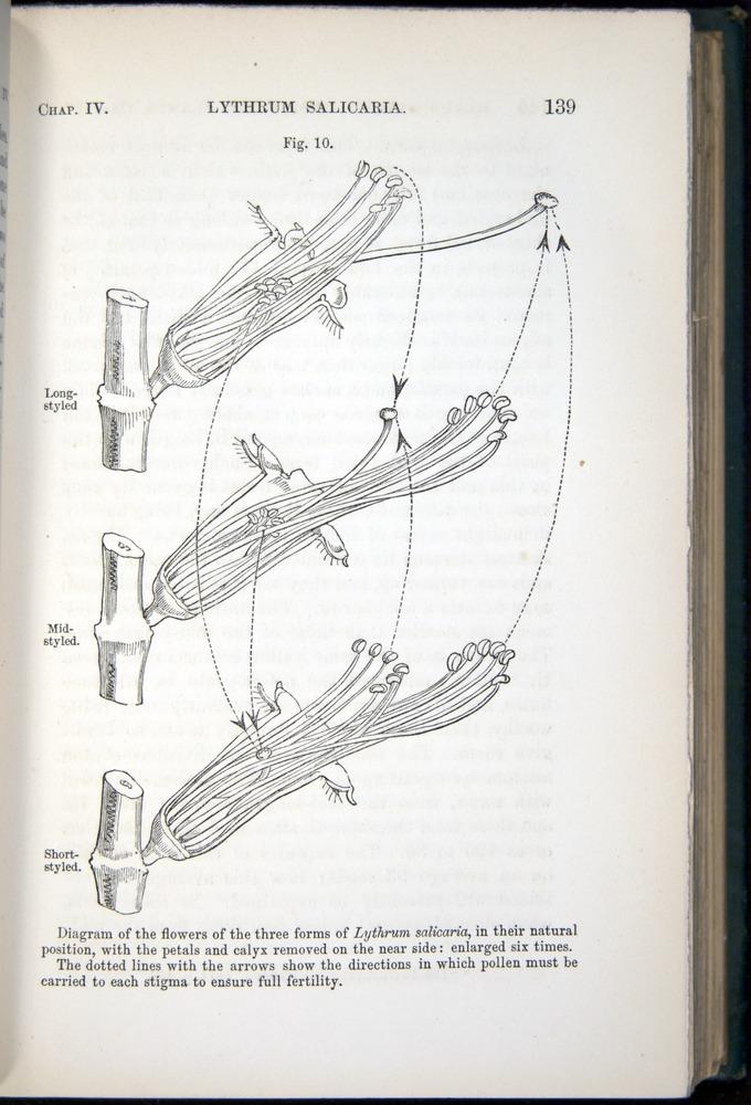 Image of Darwin-F1277-1877-139