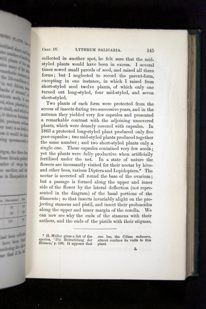 Image of Darwin-F1277-1877-145