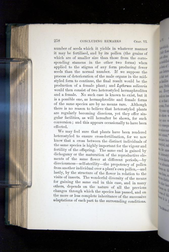 Image of Darwin-F1277-1877-258