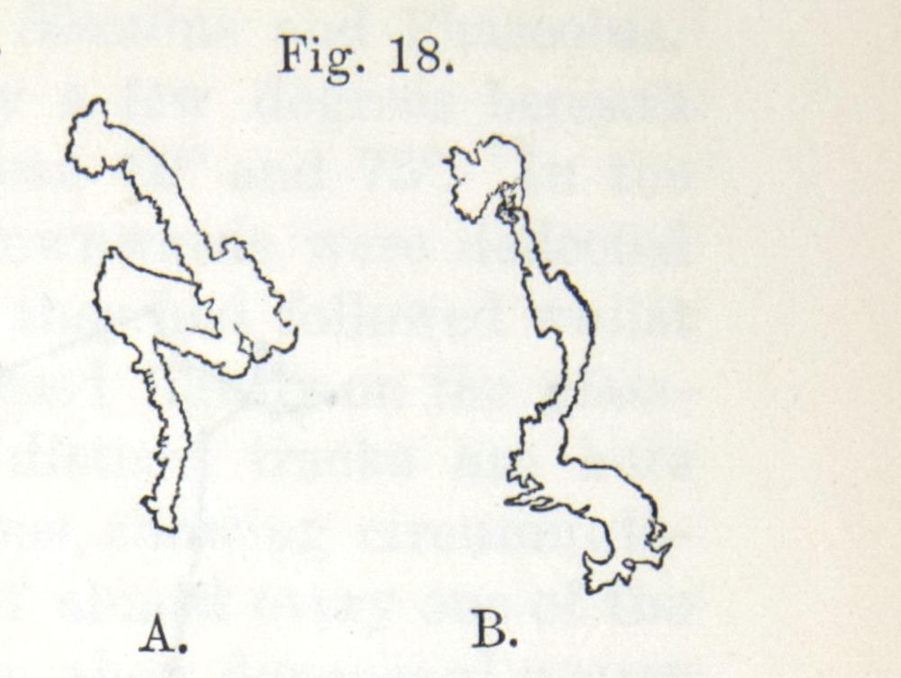 Image of Darwin-F1325-1880-zzzz-det-029-1